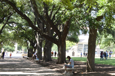 The University of Texas Campus